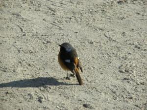 壮(h23.3.19-21鳥)三尾山3.27 172